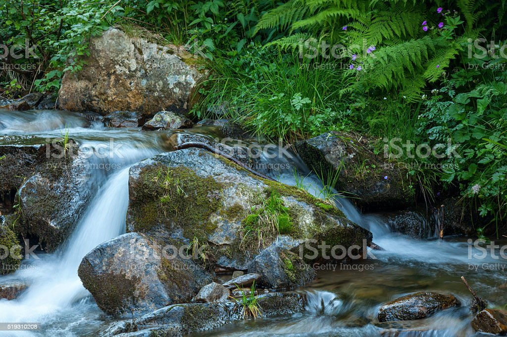 Mountain forest stream stock photo