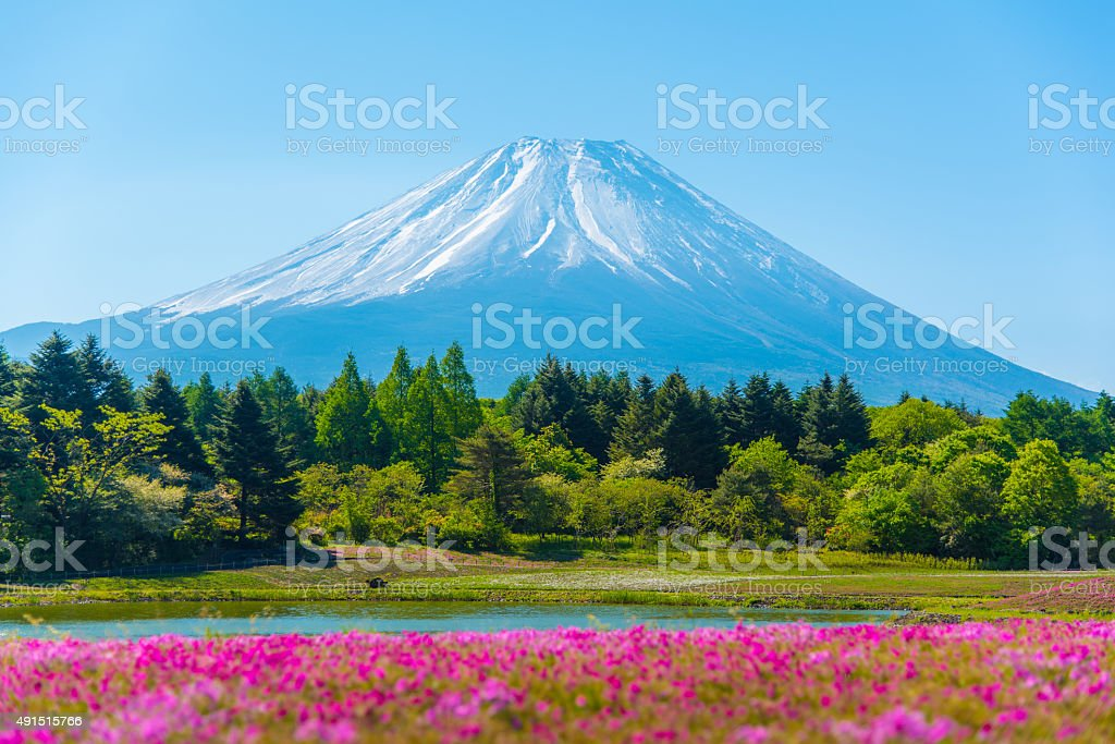 Mountain Fuji in Japan Shibazakura Festival background stock photo