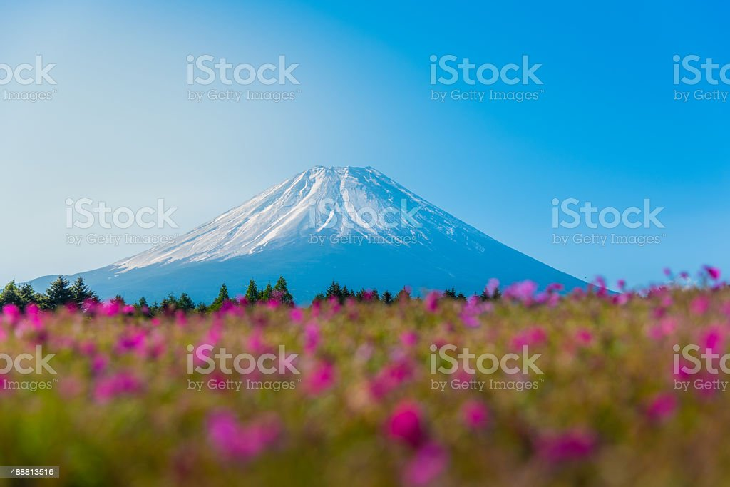 Mountain Fuji with Blurry foreground of pink moss sakura stock photo
