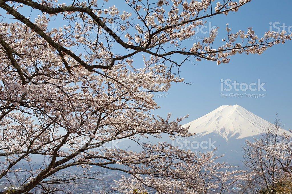 Mountain fuji with cherry blossom sakura from kawaguchiko lake stock photo