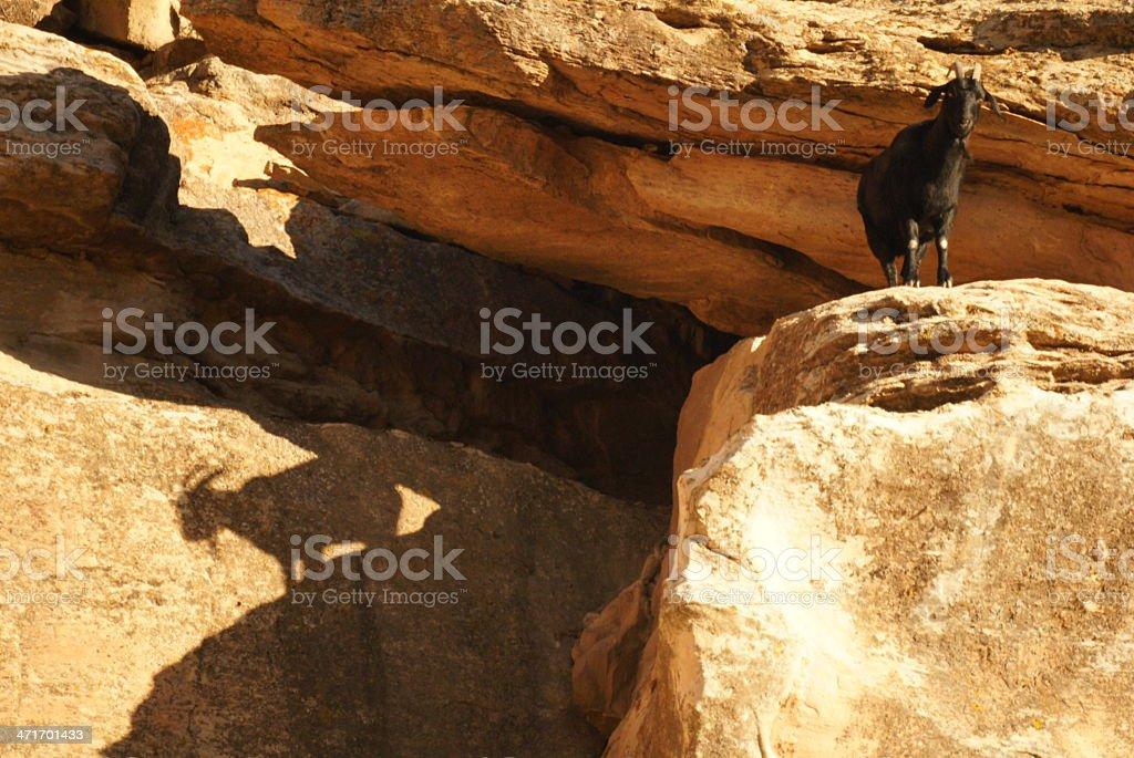 Mountain goat on a cliff stock photo