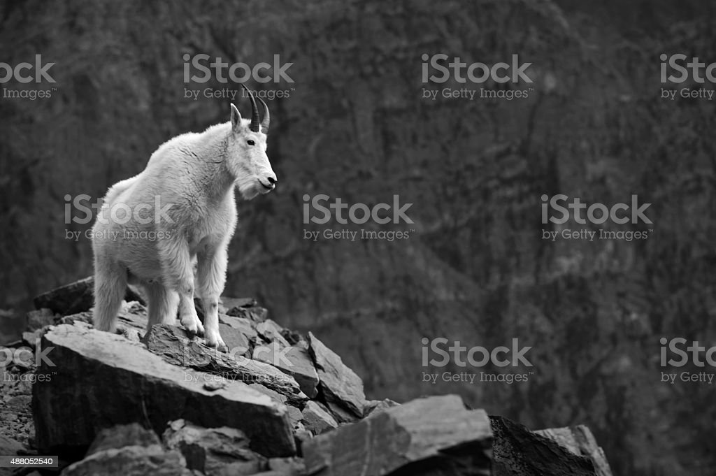 Mountain goat on clifftop stock photo