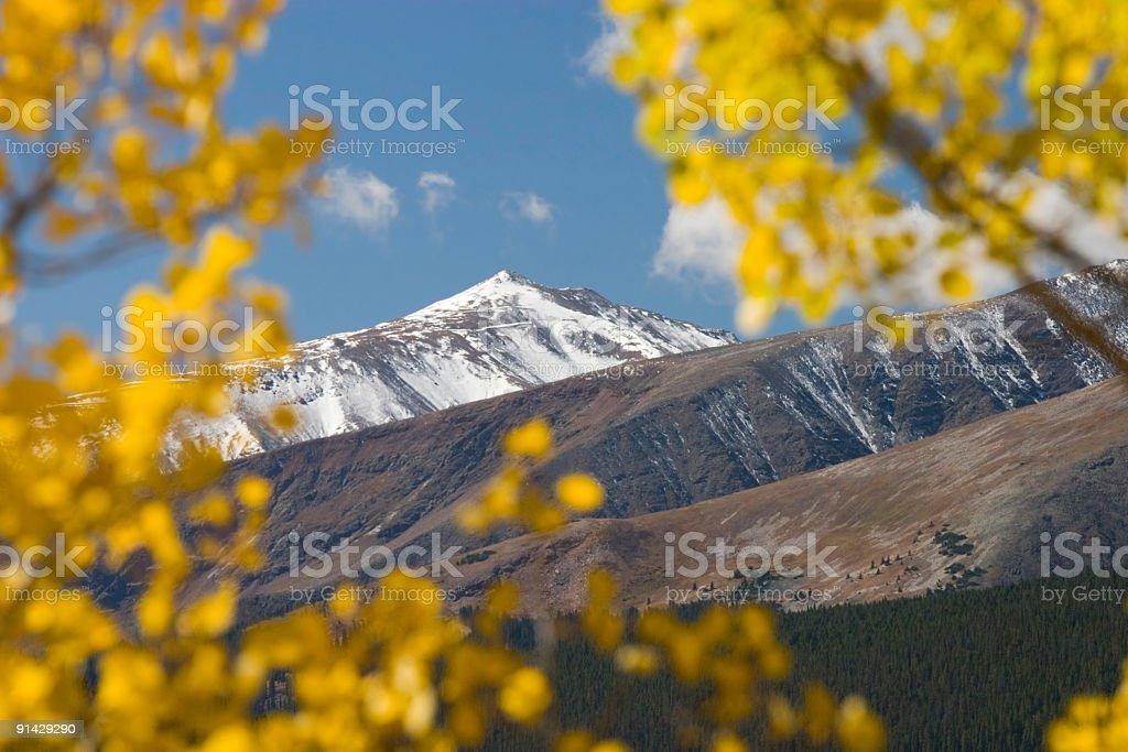 Mountain Gold stock photo