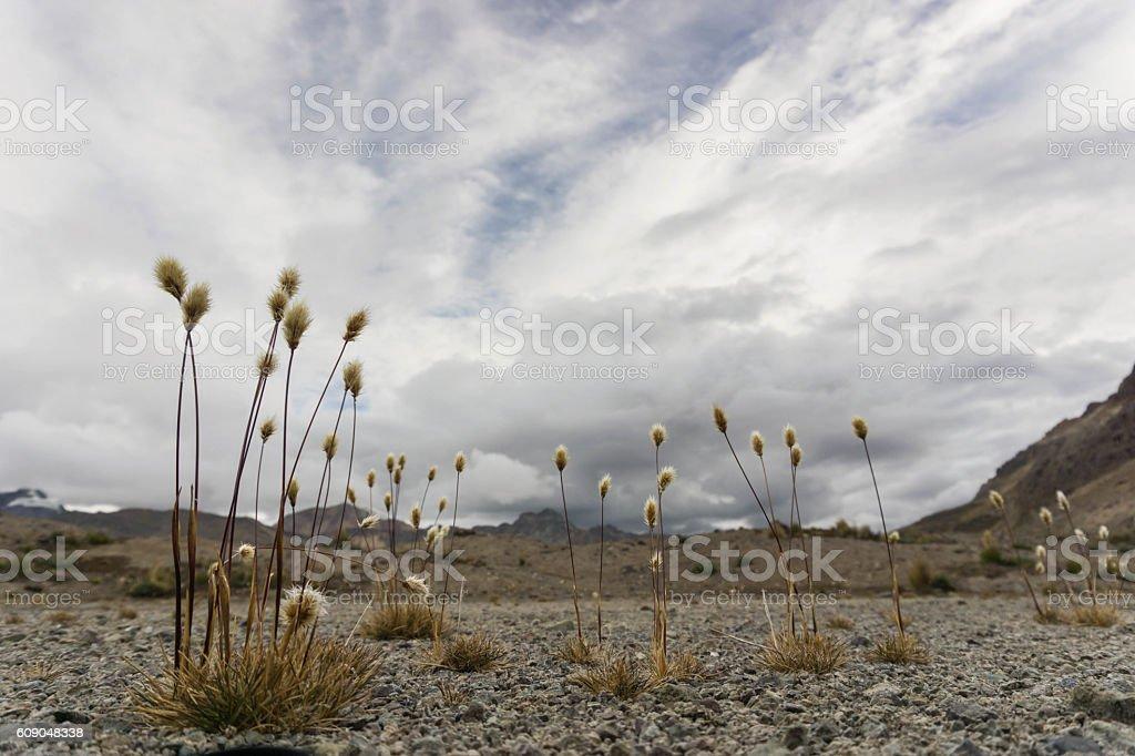 mountain grasslands in Peru stock photo