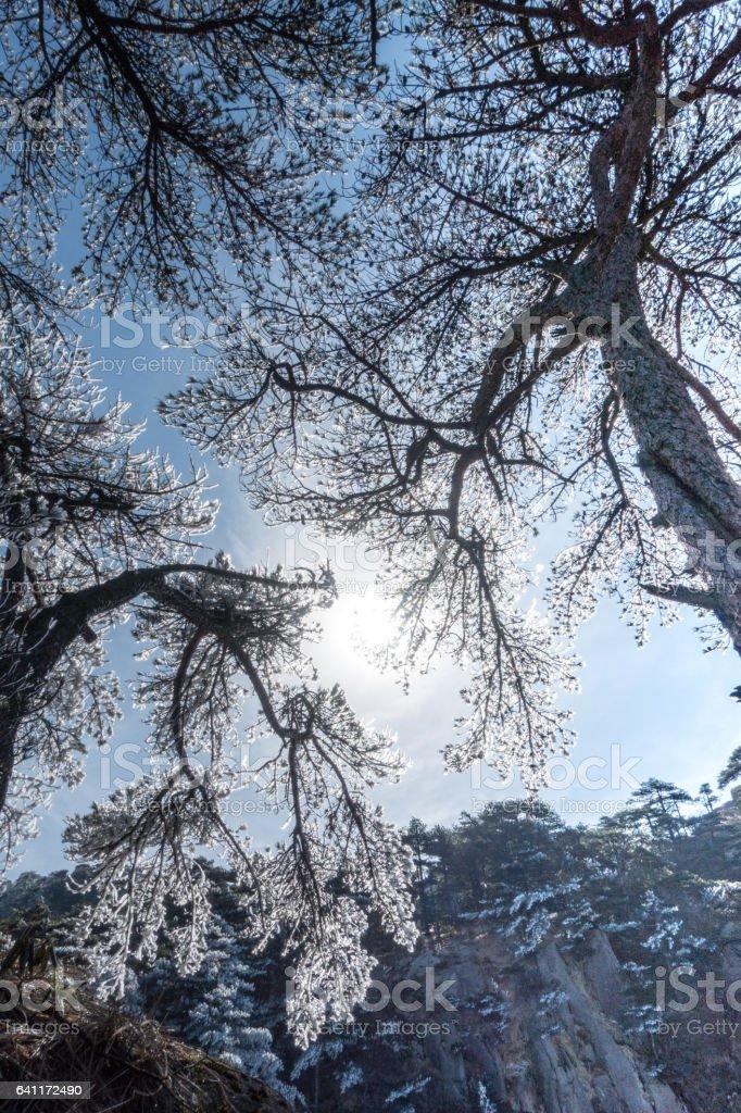 Mountain Huangshan scenery. stock photo