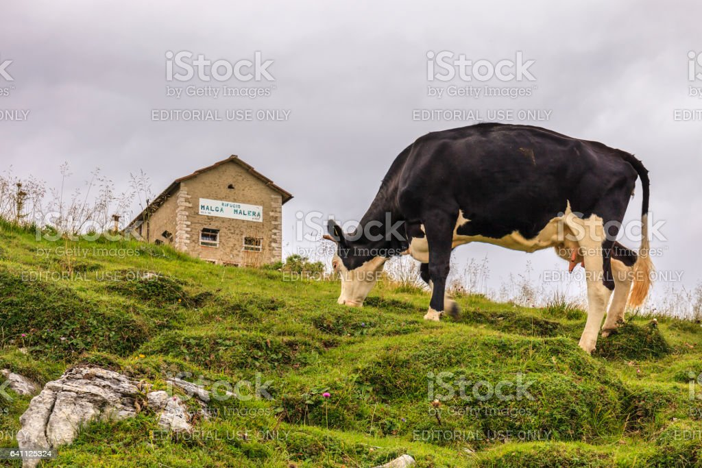 Mountain Hut with Cow in Lessinia stock photo
