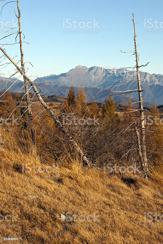 Mountain Krn in Julian Alps and Larches royalty-free stock photo