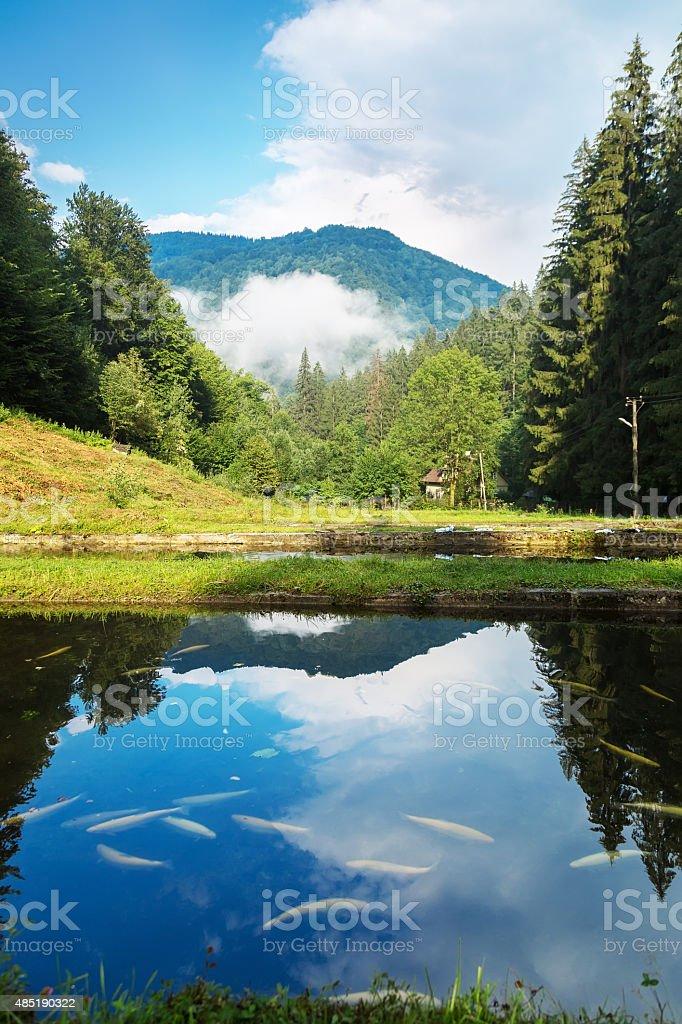mountain lake with fish stock photo