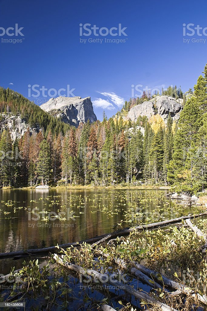 Mountain Lake With Pine Beetle Damaged Forest stock photo