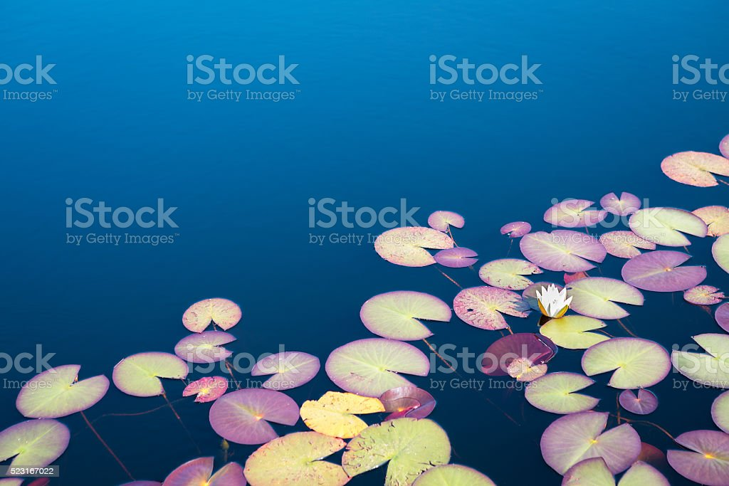 Mountain Lake With Water Lilies stock photo