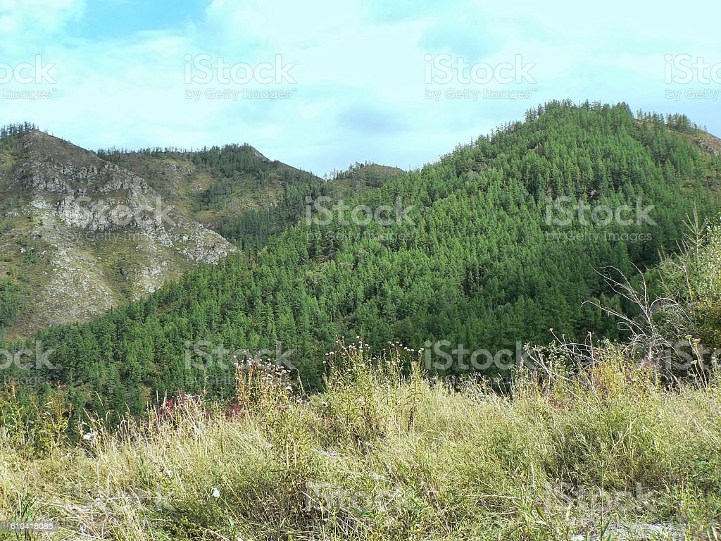 Mountain landscape. Meadow and hills behind. stock photo