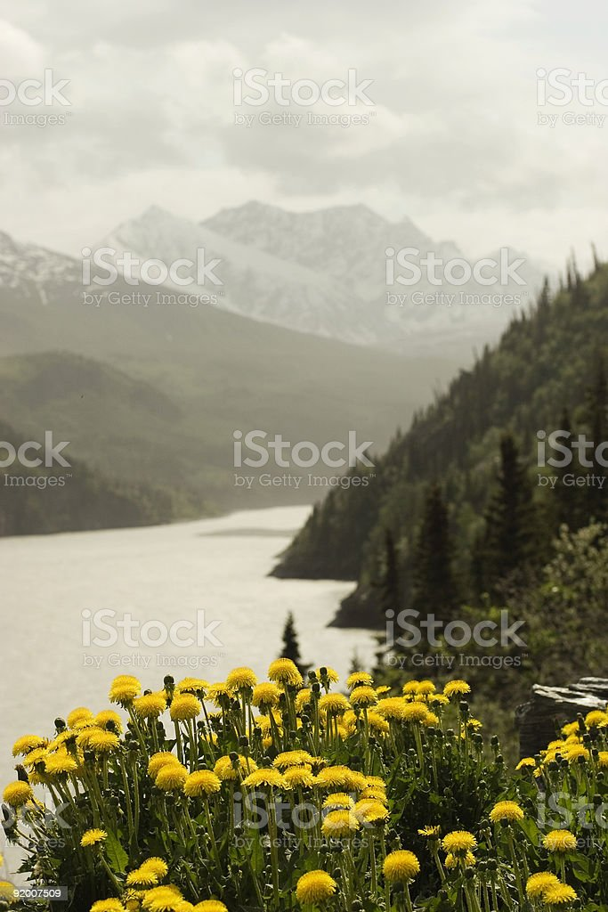Mountain landscape with dandelions stock photo