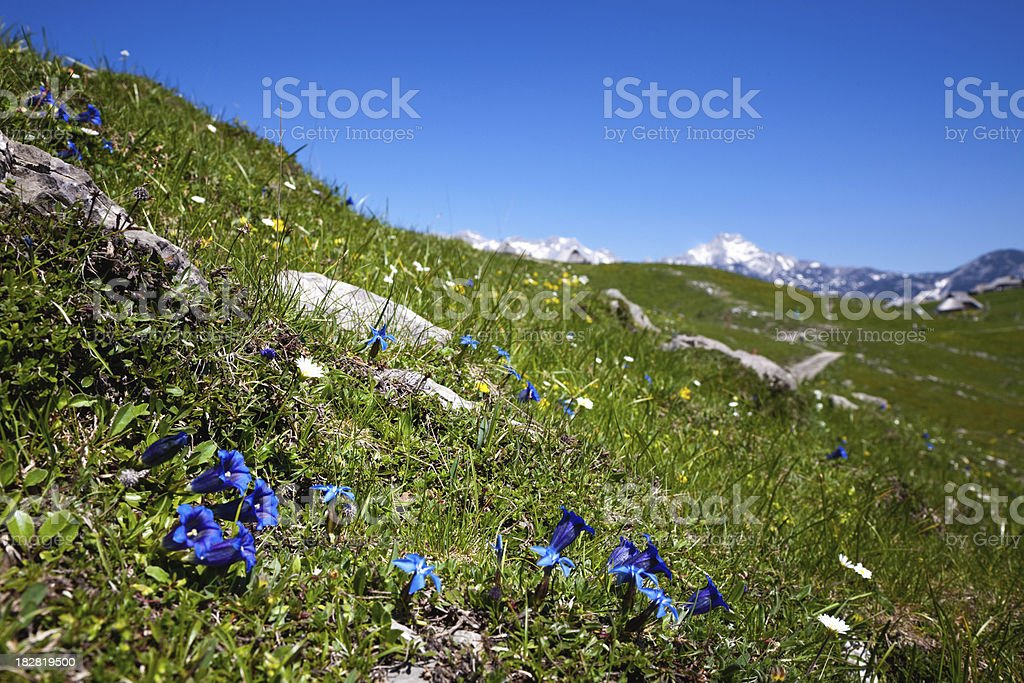 Mountain landscape with flowers stock photo