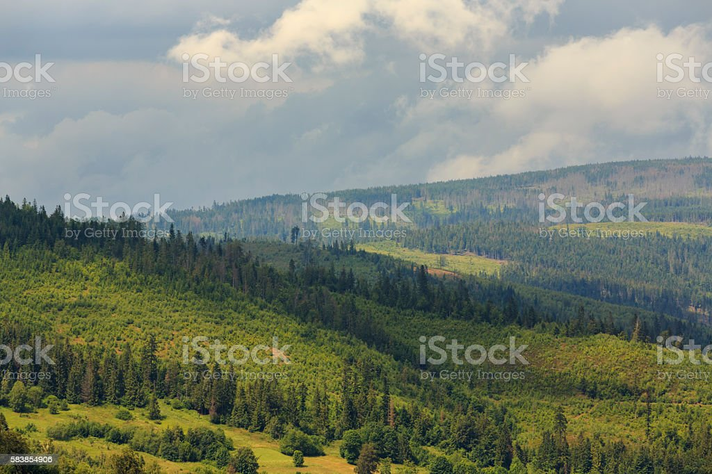 Mountain landscape with forest and sunlight stock photo