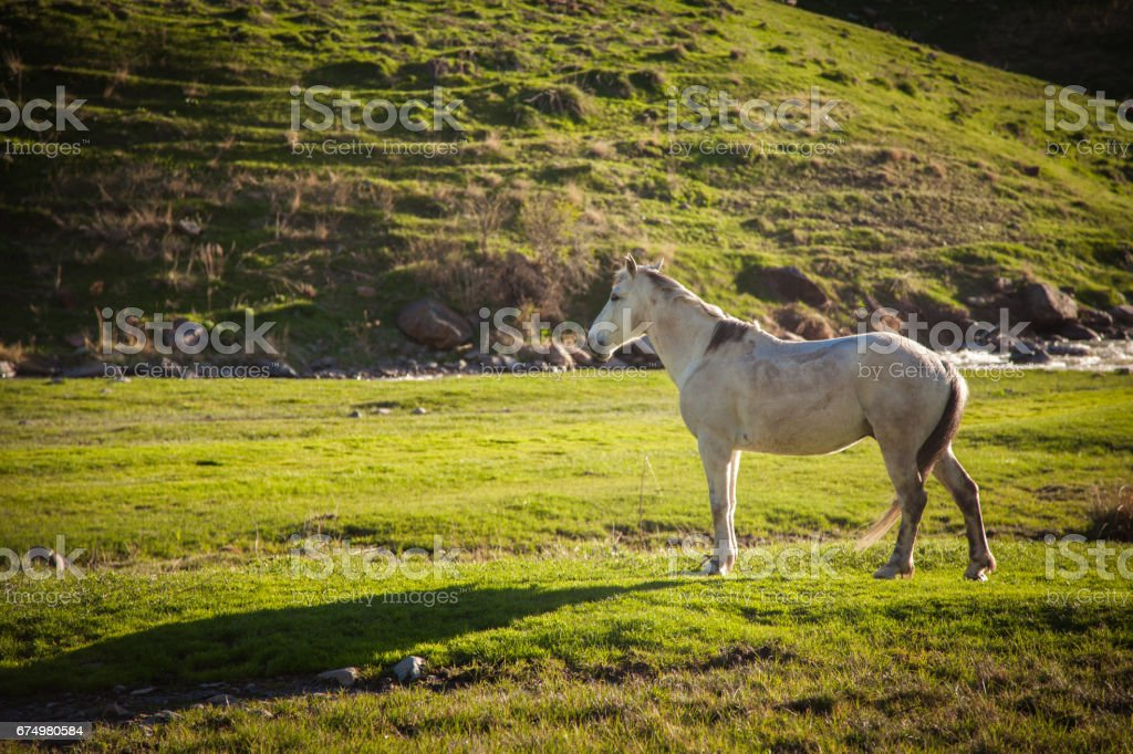 Mountain landscape with grazing horses stock photo