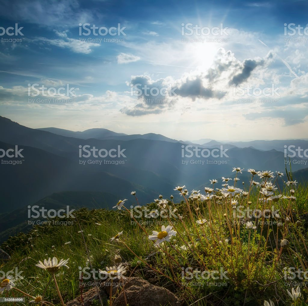 Mountain landscape with spring flowers stock photo