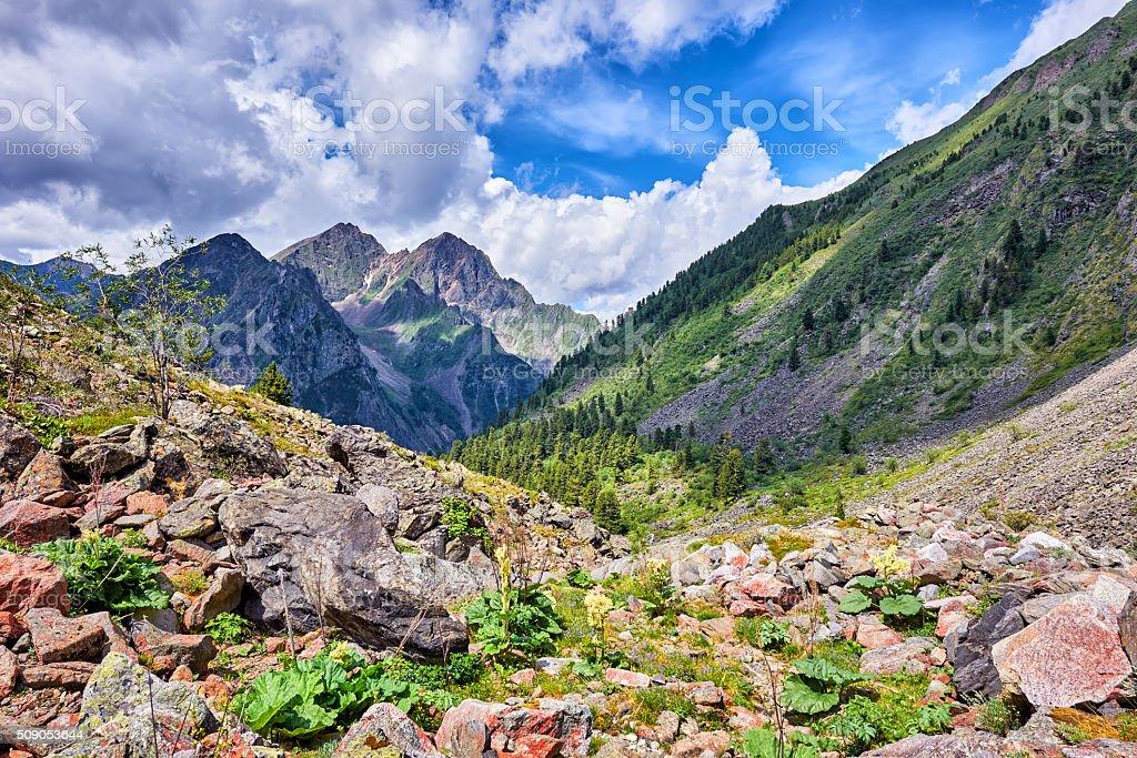 Mountain landscape with wild rhubarb stock photo