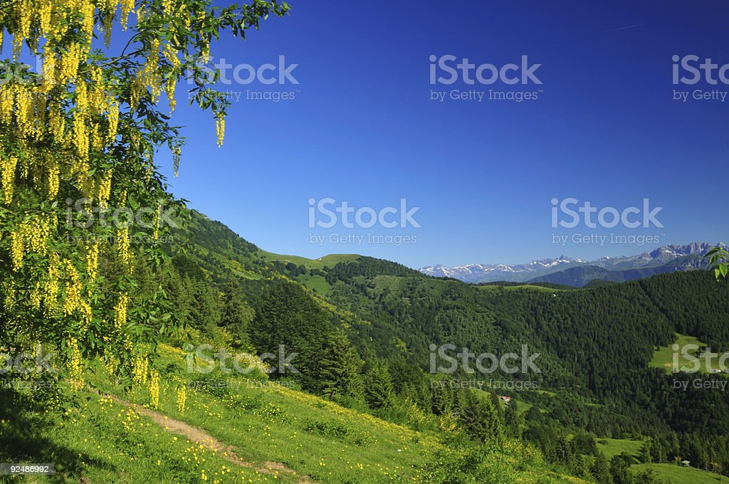 mountain landscape with yellow flowers stock photo