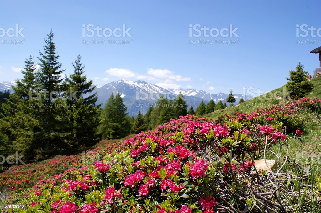 Mountain lanscape in South Tyrol stock photo