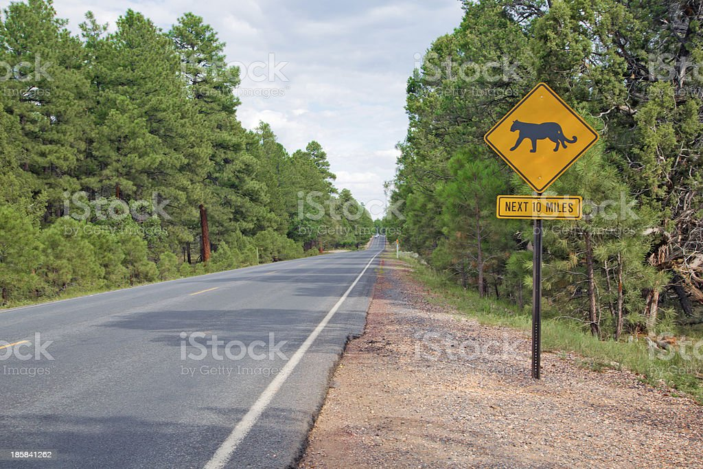 Mountain lion alert road sign, Grand Canyon royalty-free stock photo