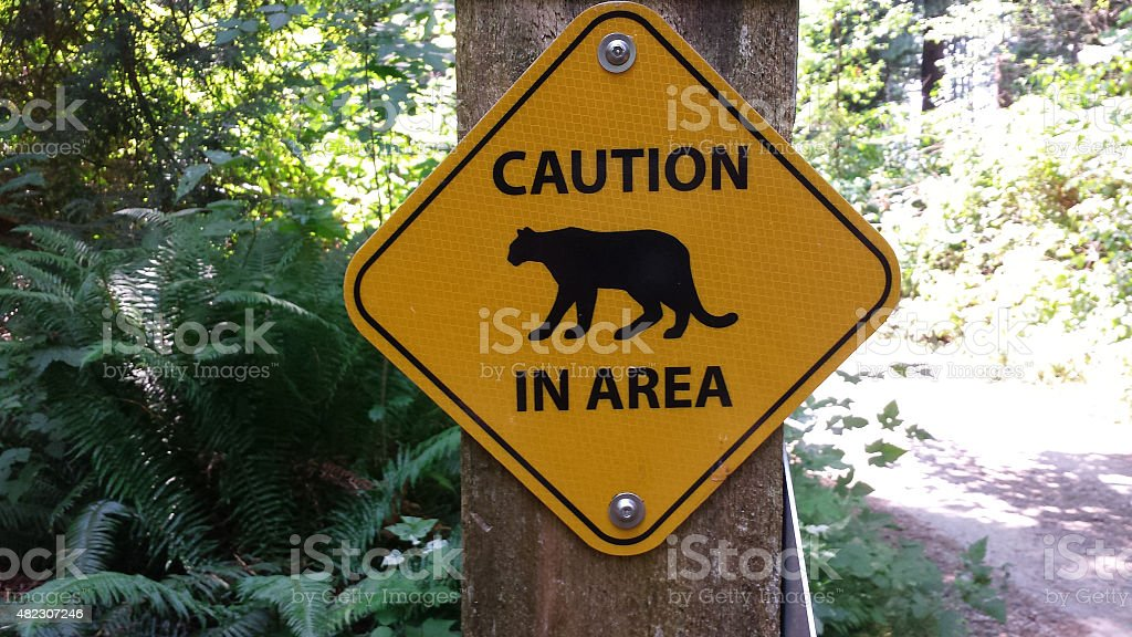 Mountain Lion in Area Caution Sign stock photo