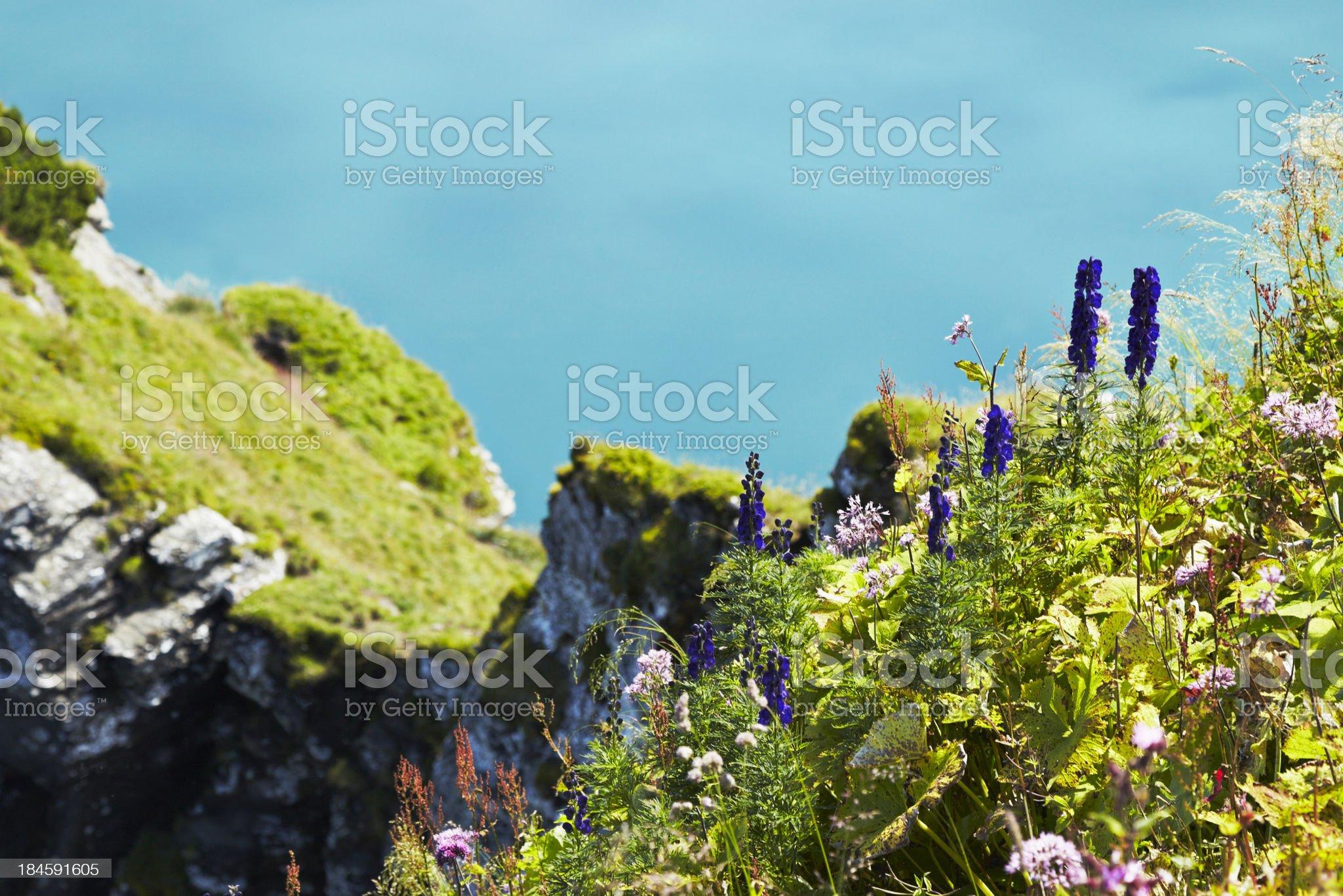 Mountain meadow royalty-free stock photo