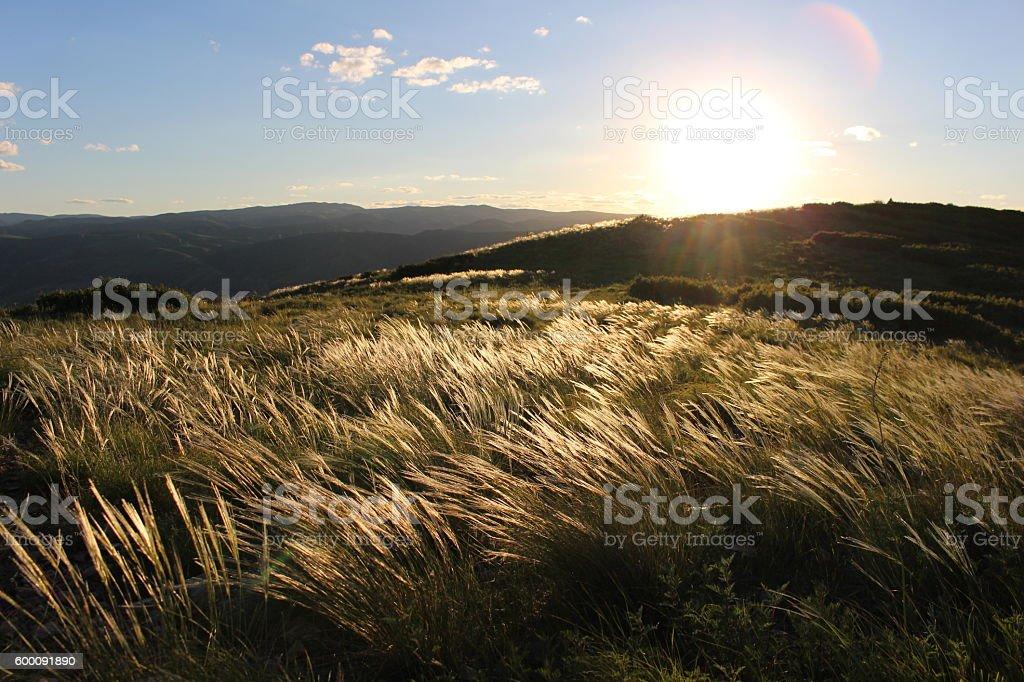 Mountain Meadow Sunset stock photo