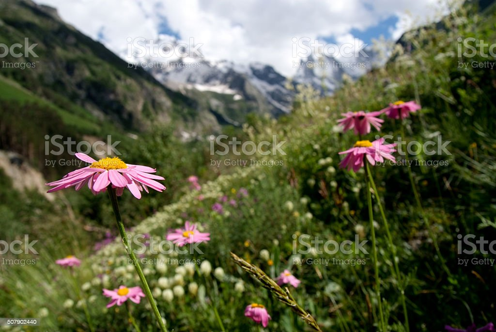Mountain meadow with flowers stock photo