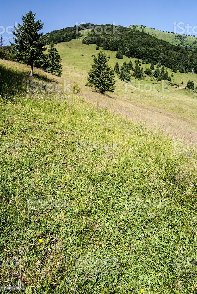 mountain meadow with isolated trees, hill and clear sky stock photo