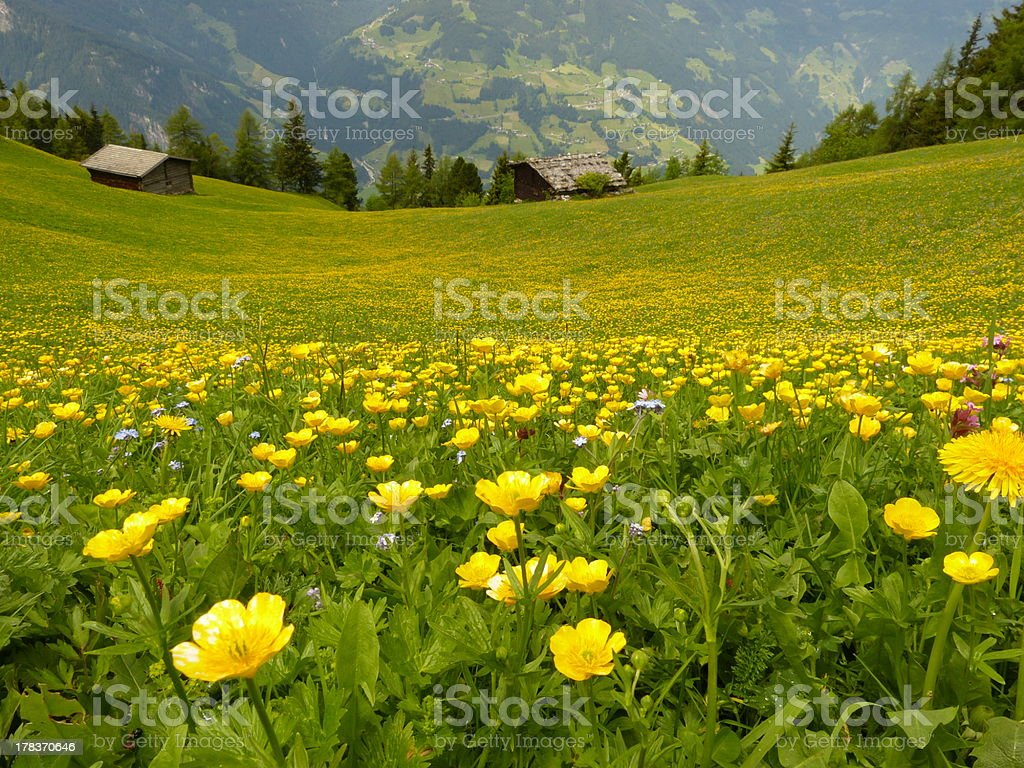 Mountain meadow with two wooden houses stock photo