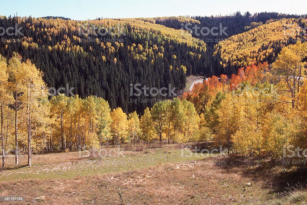 Mountain Meadow yellow aspen trees autumn Payson Lakes Utah stock photo