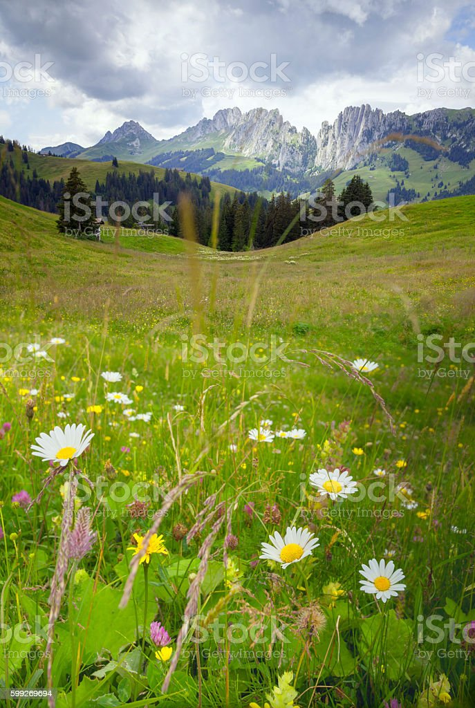 Mountain Meadow,Swiss Alps. stock photo