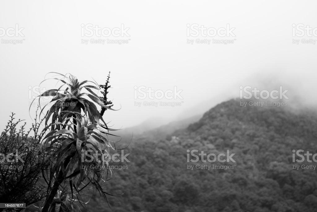 Mountain Neinei with Distant Mist, The Kahurangi National Park stock photo
