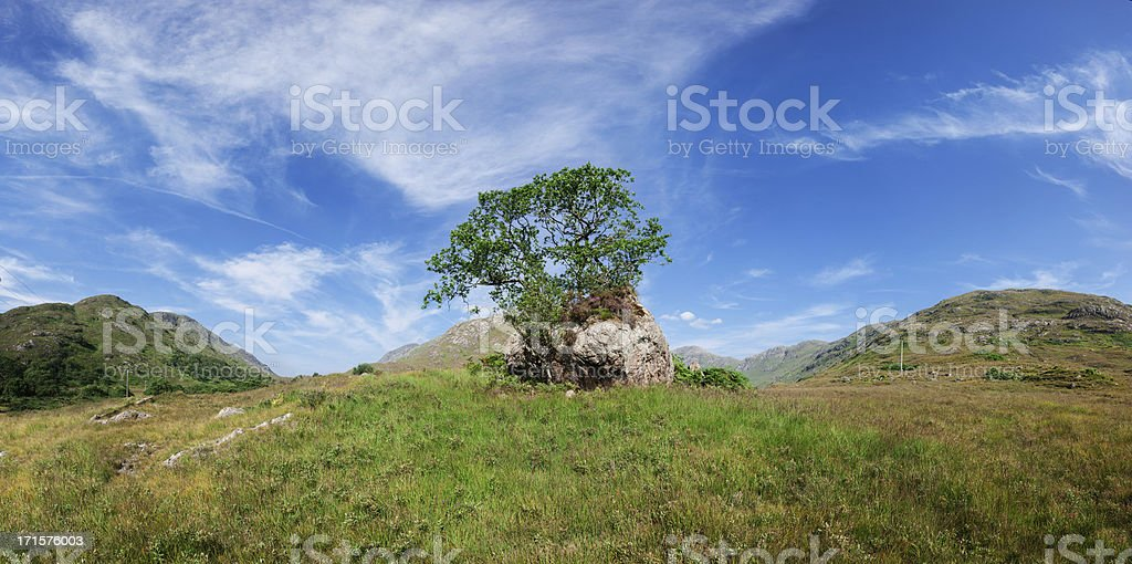 Mountain Oak tree in Scottish valley with impressive clouds royalty-free stock photo