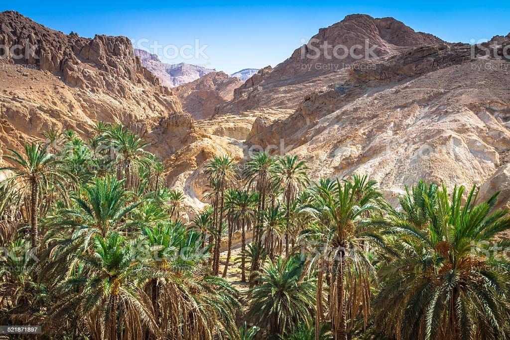 Mountain oasis Chebika at border of Sahara, Tunisia, Africa stock photo