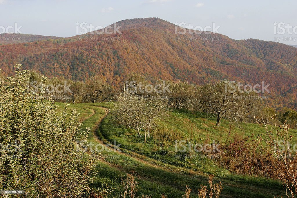 Mountain Orchard royalty-free stock photo