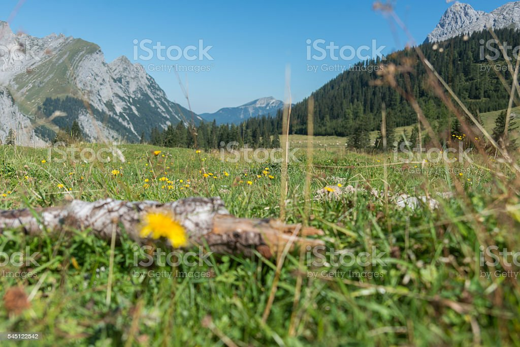 mountain panorama in european alps with meadow stock photo