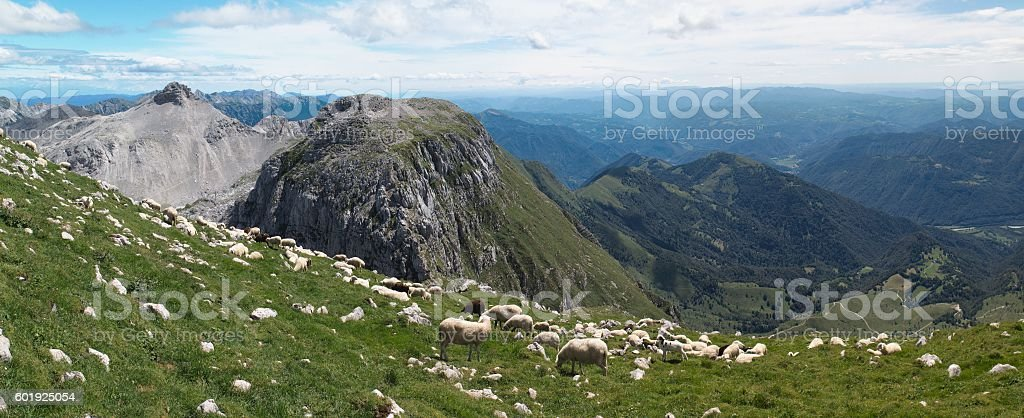 mountain pasture in south hillside of Krn mountain stock photo