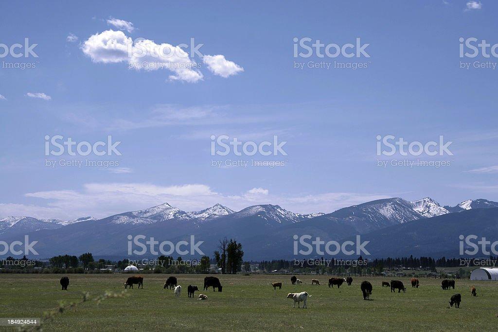 Mountain Pasture royalty-free stock photo