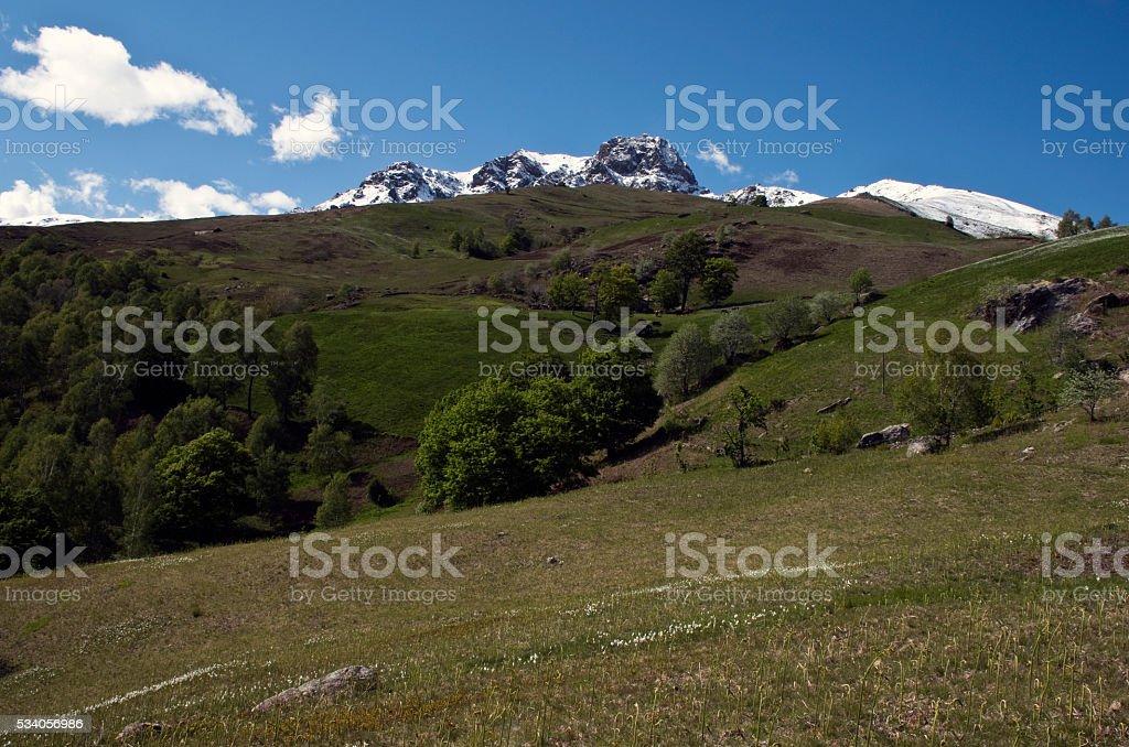pascolo di montagna stock photo