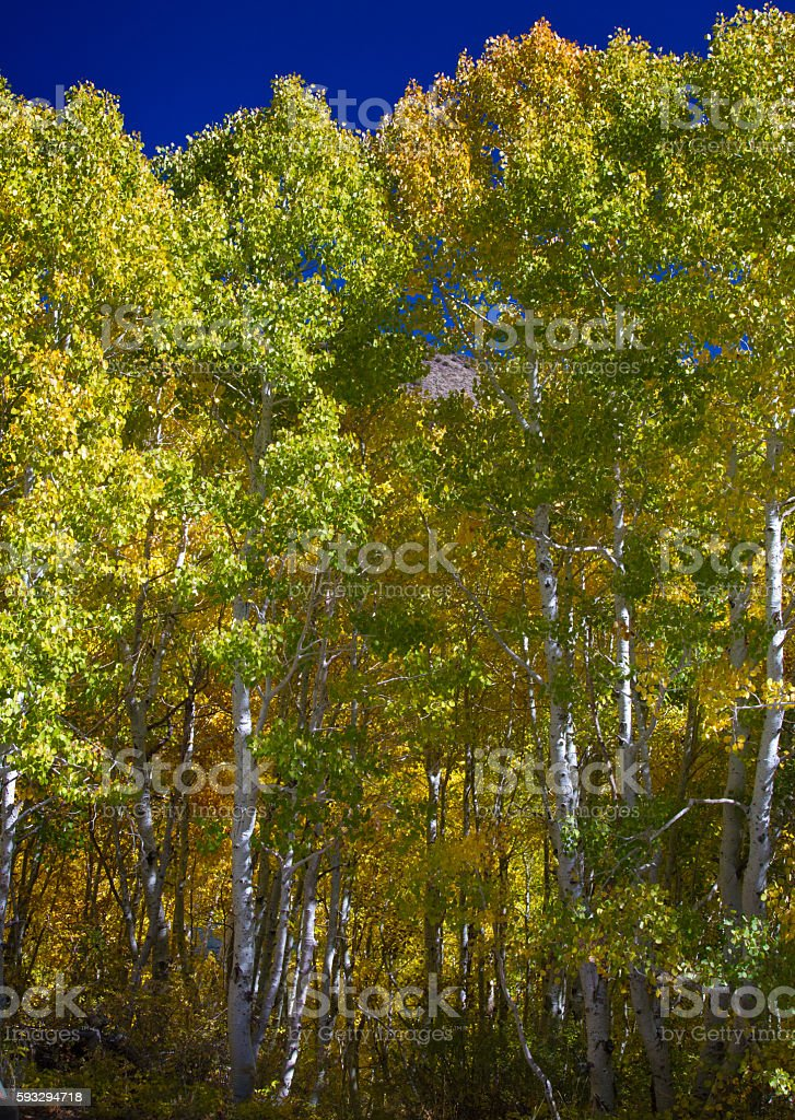 Mountain Peaking Through the Trees stock photo