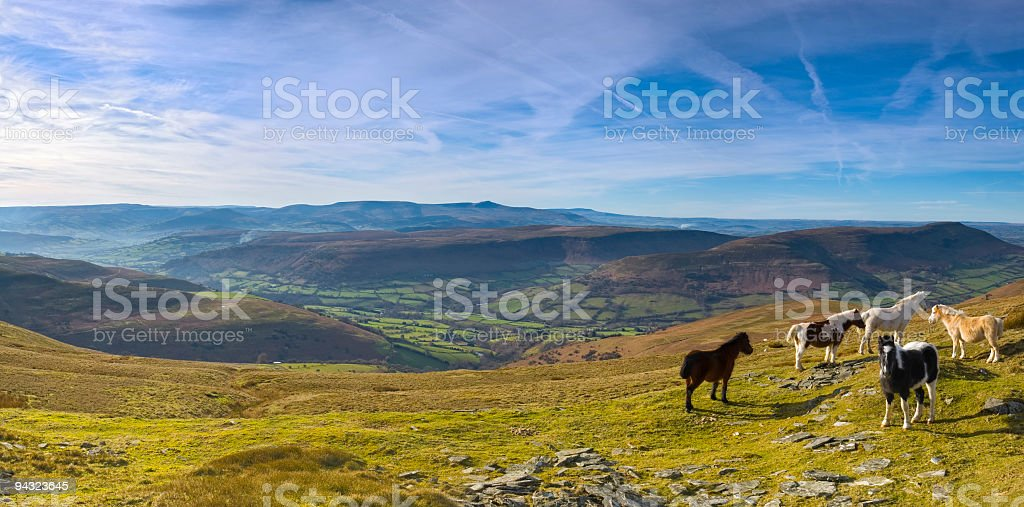 Mountain ponies, green valleys, blue horizon stock photo