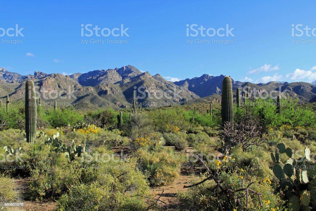 Mountain Range Beside Bear Canyon Arizona stock photo
