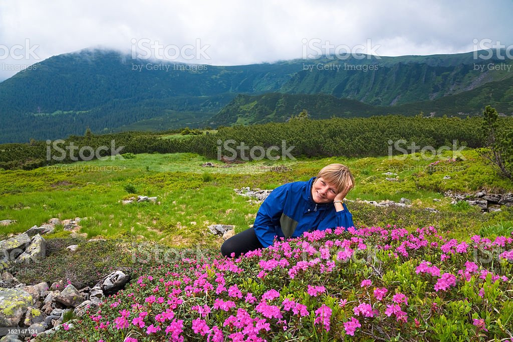 Mountain rhododendron blossoming royalty-free stock photo