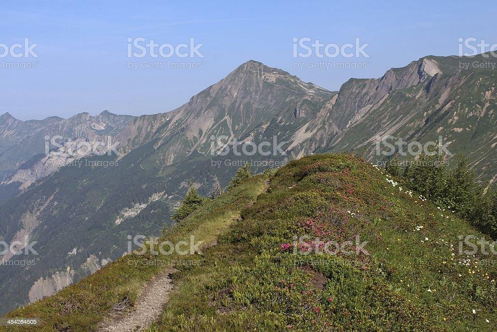 Mountain ridge with Alpenrosen royalty-free stock photo
