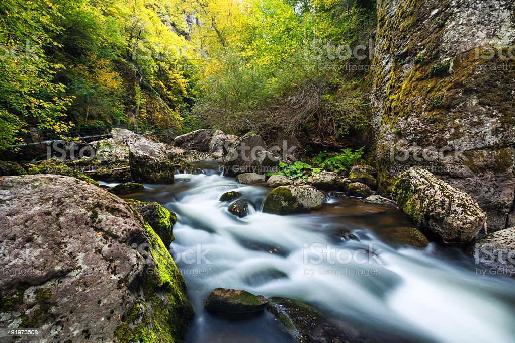 Mountain river flowing through the green forest stock photo