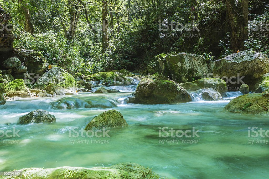 Mountain River in the Cloud Forest stock photo