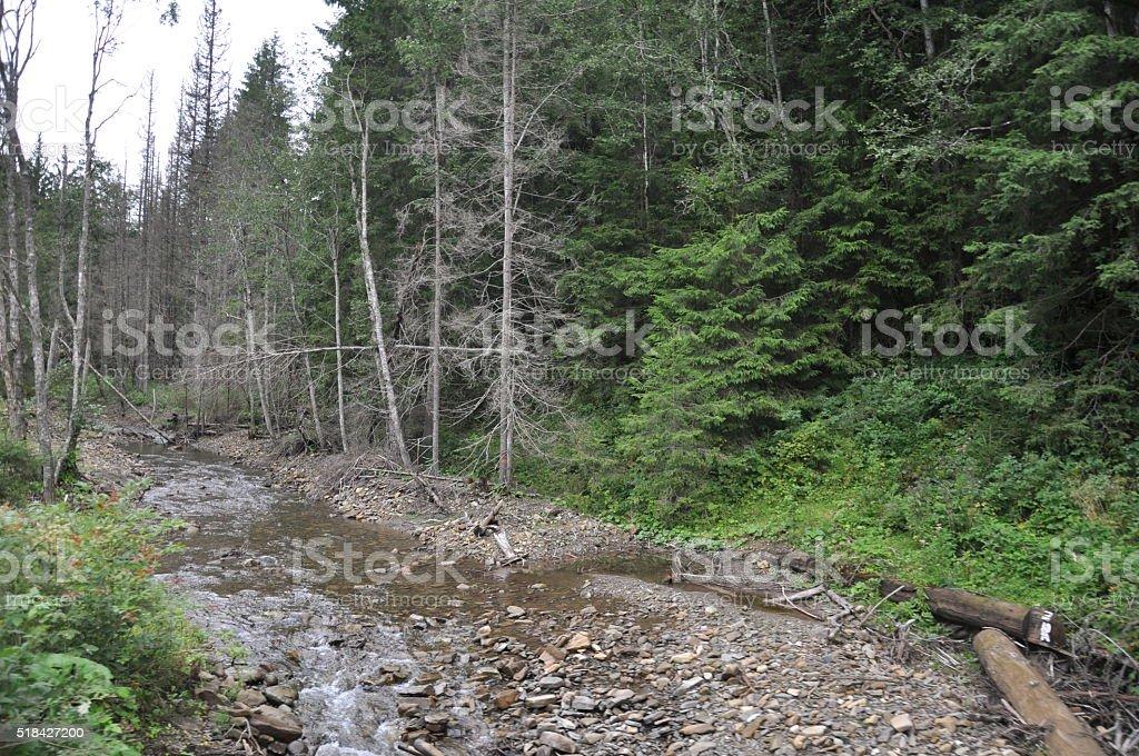 Río de montaña en el bosque foto de stock libre de derechos