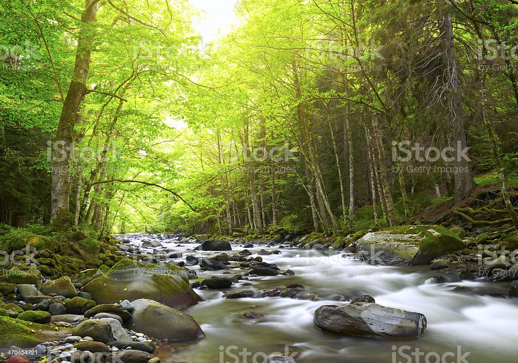 Mountain River in the wood stock photo