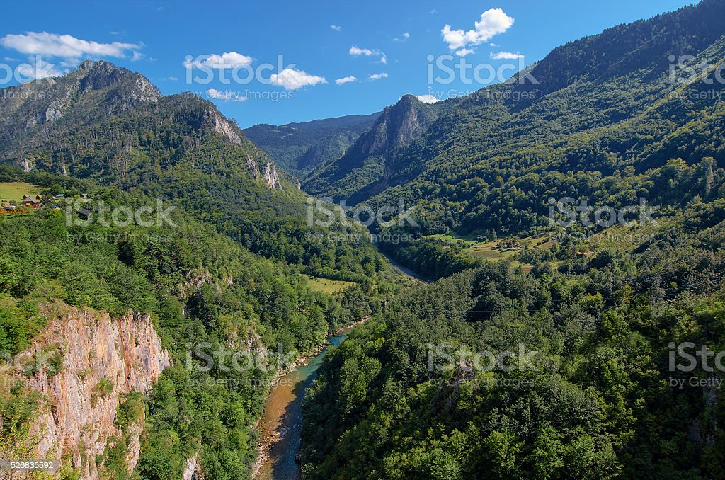 Mountain river Tara and forest in Montenegro. stock photo